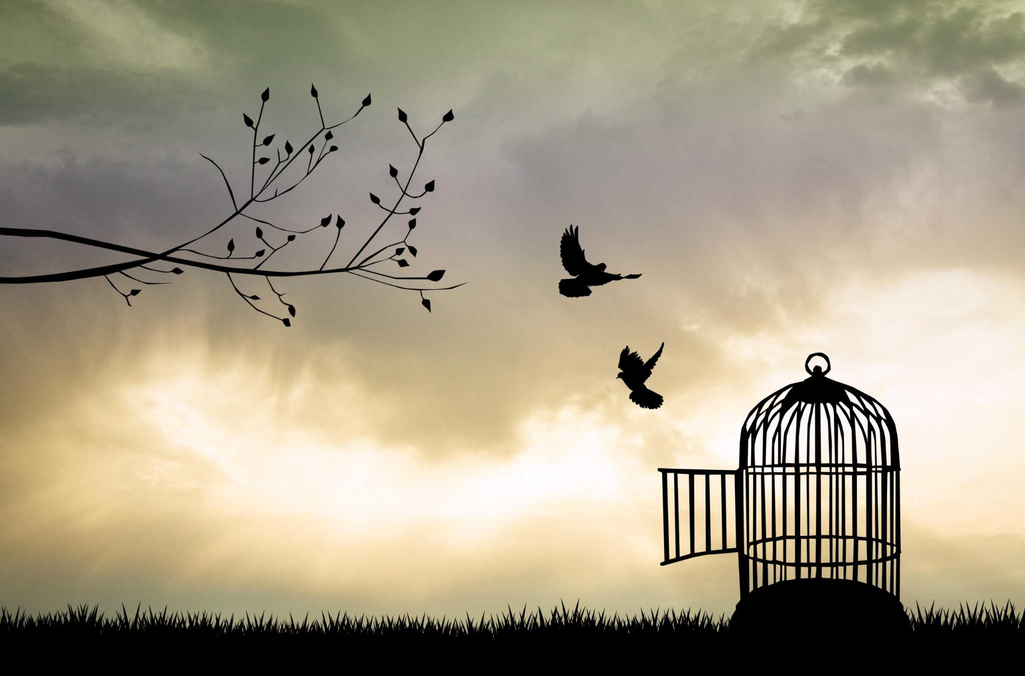 Özgür Düşünce